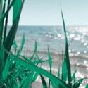 Nos nouvelles plumes: Littérature québécoise