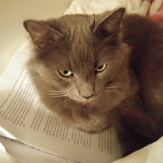 Les chats savent-ils lire?