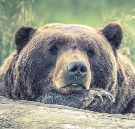 Un ours à la bibliothèque
