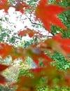 Les essentiels de l'automne