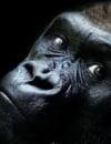 Les animaux et l'élargissement de la sphère éthique