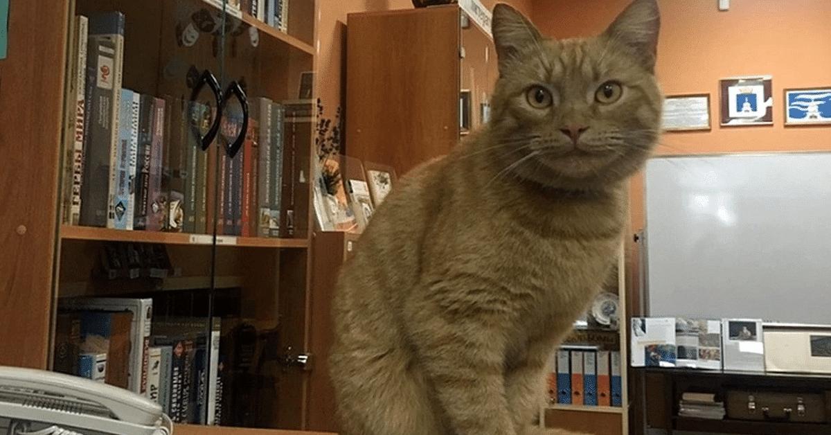 Profession : chat de bibliothèque